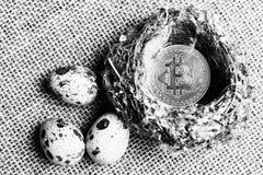 Bitcoin na ptaka gniazdeczku obok jajek, bitcoins i nowej koncepcji wirtualny pieniądze, z bliska Bia?y zdjęcie stock