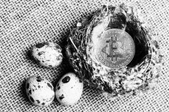 Bitcoin no ninho do pássaro ao lado dos ovos, dos bitcoins e de um novo conceito do dinheiro virtual Fim acima Preto-branco foto de stock