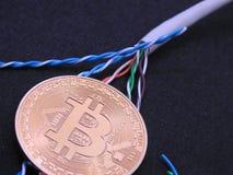 Bitcoin och UTP kabel royaltyfri bild