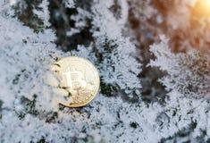 Bitcoin Bitcoin på guld- snö, i bakgrunden Begreppet av att frilansa, börsen övervintrar trees för snow för sky för lies för fros royaltyfria bilder