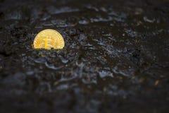 Bitcoin Porzucał W błota, Gubjącego I Zapominającego waluty pojęciu, obraz royalty free