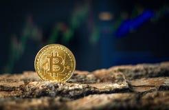 Bitcoin sesja fotografia royalty free
