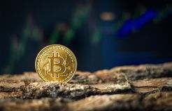 Bitcoin session royalty free stock photography