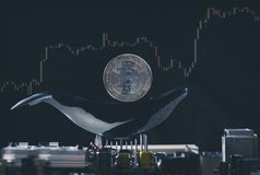 Bitcoin Whale Holder Conceptual Image stock image