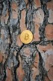 Bitcoins dourados no fundo de madeira Imagens de Stock