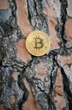 Bitcoins dourados no fundo de madeira Fotografia de Stock