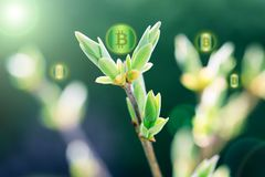 Bitcoins on sprout plant as a symbol of growth up bitcoin and cr Royalty Free Stock Photography