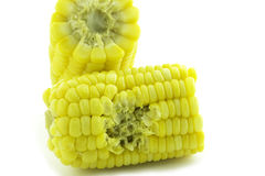 Bite corn Royalty Free Stock Image