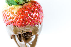 Bite of juicy strawberry covered in chocolate royalty free stock image