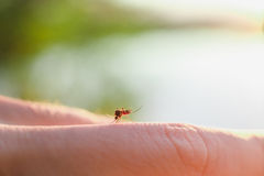 The bite of a mosquito with blood on human body stock image