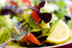 Bite of Salad on Fork Royalty Free Stock Photo