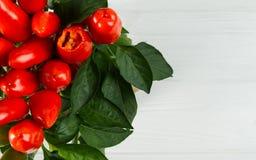 Biten bästa sikt för röd kylig pepparväxt på vit bakgrund arkivfoto