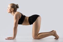 Bitilasana yoga Pose. Sporty beautiful young woman practicing yoga, working out, doing backbend in Cow posture, Bitilasana, exercise for flexible spine and Royalty Free Stock Photo