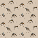 Biting mosquitoes Stock Photography
