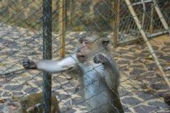 Bitten des Affen Lizenzfreies Stockbild