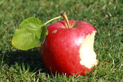 Bitten red apple. With green lief lying on the grass royalty free stock photo