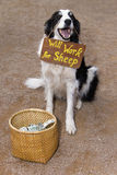 Bitten Schäferhund Stockfotos