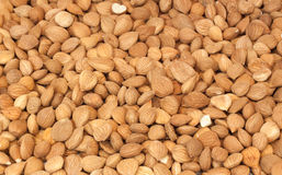 Bitter apricot seeds Royalty Free Stock Image