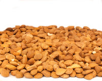 Bitter apricot seeds Royalty Free Stock Photos