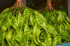 Bitter bean (Parkia speciosa). Fresh bunch of Parkia speciosa or green beans, stink beans, stink bitter beans, twisted cluster beans, Sato seeds in market Sato Royalty Free Stock Images