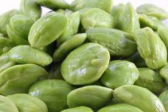 Bitter bean Stock Images