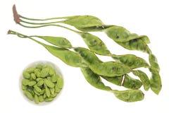 Bitter Beans, Petai Stock Photo