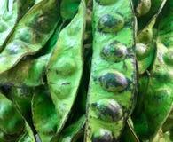 Bitter Beans. Stink Beans. Petai. Parkia speciosa & x28;petai& x29;, Zeliang Naga calls it Kampi& x28;Dimasa:Barthai; Mizo: Zawngṭah, Paite: Zawngtah, Thadou Royalty Free Stock Photography