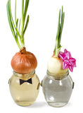 Bitter couple. Two onions in a glass jar with water on an isolated white background Royalty Free Stock Images