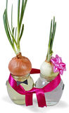 Bitter couple. Two onions in a glass jar with water on an  white background Royalty Free Stock Images