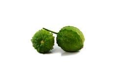 Bitter cucumber Stock Image