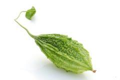 Bitter cucumber, herbal plant Stock Photos
