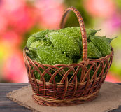 Bitter melon or momordica in a wicker basket on wooden table with blurred background. Bitter melon or momordica in a wicker basket on a wooden table with a stock photos
