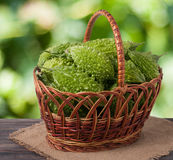 Bitter melon or momordica in a wicker basket on wooden table with blurred background. Bitter melon or momordica in a wicker basket on a wooden table with a stock images