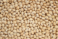 Bitter neavy beans background Royalty Free Stock Photos