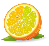 bitter orange sötsak Arkivbilder