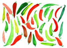 Bitter pepper. Many different s, yellow, red green, burgundy on a white background. Watercolor. Background Royalty Free Stock Photography
