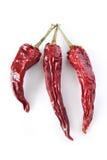 Bitter red pepper Stock Image