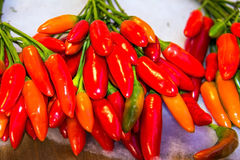 Bitter red pepper Royalty Free Stock Image