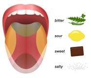 Free Bitter Sour Sweet Salty Tongue Taste Map Stock Image - 81158761
