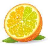 Bitter sweet orange. Unripe bitter and ripe sweet half of juicy orange - vector illustration Stock Images