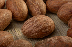 Bittercola nut Stock Photography