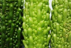 Bittere Meloenen Stock Afbeelding