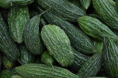 Bittere Melone stockbild