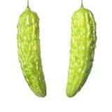 Bittere Melone Stockbilder