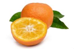 Bittere Sinaasappel Royalty-vrije Stock Afbeelding