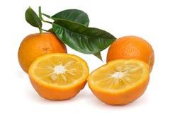 Bittere Sinaasappel Stock Foto's