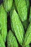 Bitteres Kürbis-Gemüse Stockbild