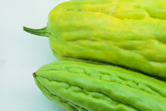 Bittergourd. Fresh bitter gourd isolated on white background Royalty Free Stock Photo