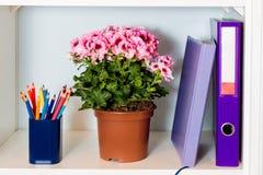 Biurowa półka z falcówki, noteook, kwiatu i ołówka właścicielem, Obrazy Royalty Free