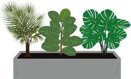 Biurowa roślina 08 ilustracji